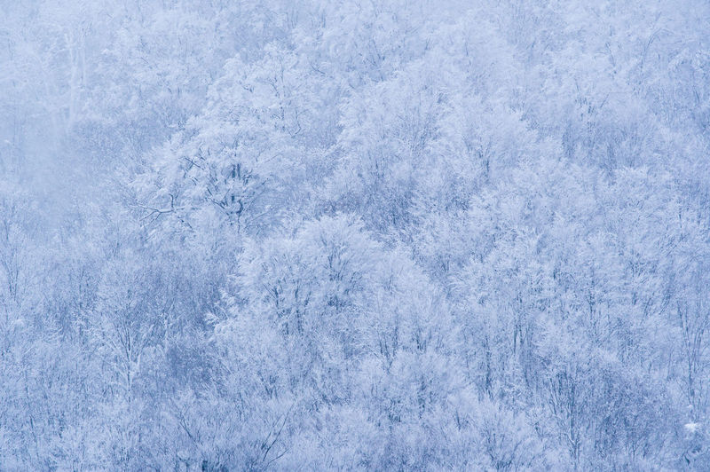 Cold Temperature Snow Winter Frozen Ice Backgrounds Nature Snowflake No People Frost Forest White Color Land Environment Blue Full Frame Snowing Plant Textured  Abstract Outdoors Extreme Weather Abstract Backgrounds Blizzard Textured Effect