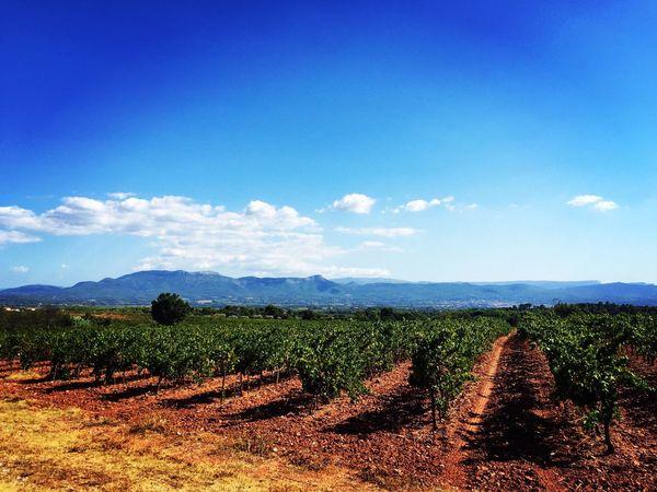 Landscape #Nature #photography Saintevictoire Montain  Vine Good Weather