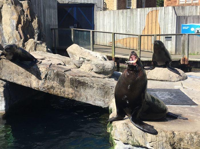 Sea Lion Animal Themes Zoo Feeding  Animal Zoo Animals  Bristol Zoo Bristol Perfect Timing Moment