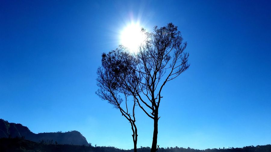 Lone Tree on Top of Mount Bromo Nature Clear Sky Beauty In Nature Sunlight Low Angle View Tranquility Tree Photography Outdoors Day Sky Bare Tree Branch Photooftheday Indonesian Photographers Collection Nature INDONESIA