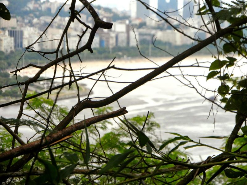 Enredado Brasil Riodejaneiro Tree Nature Branch Outdoors No People Forest Leaf Plant Landscape Day Water Beauty In Nature Tree Area Plant Part Sky EyeEmNewHere