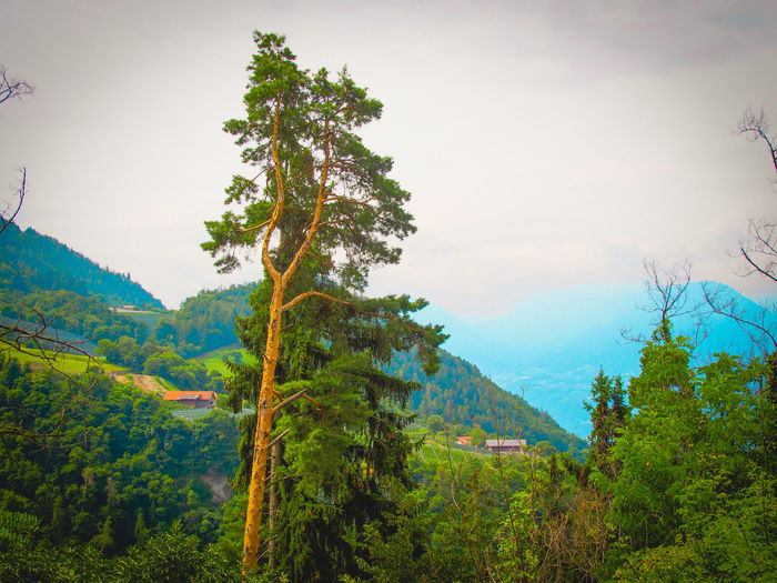 Scenery Nature