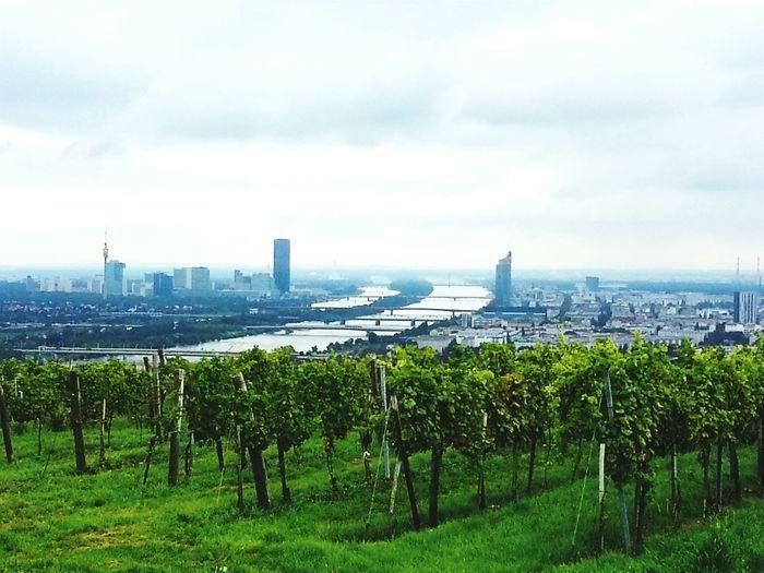 Vienna Tower Hiking Enjoying Life Relaxing Taking Photos Capital Cities  Austria Nice Day Blue Sky
