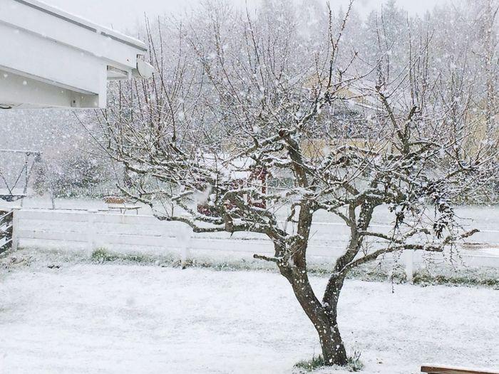 Snowing Agaim 👎🏻❄️😱 I want spring back ... Nature Snow April Weather Snowinapril