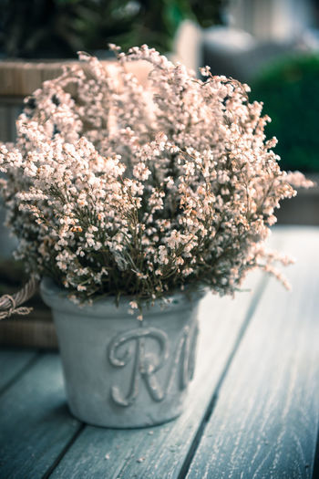 Close-up of flowers on table