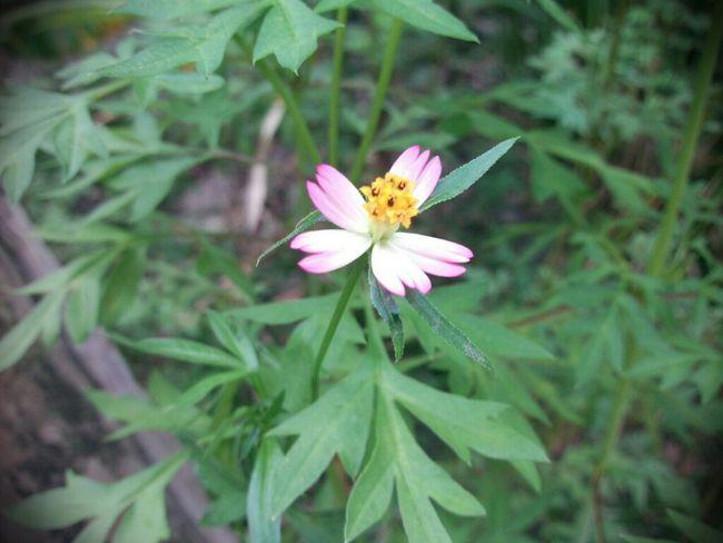 Flowers AsusTransformerPrime