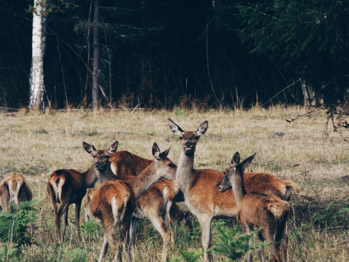 Animals Animal Photography Field Fieldscape Nature Nature Photography Roe Deers Latvia