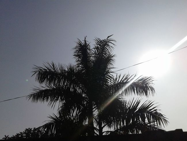 sunny day after a long time♡ Tree Low Angle View Palm Tree Silhouette Sky No People Nature Outdoors Tree Trunk Beauty In Nature Branch Day Food Stories EyeEmNewHere