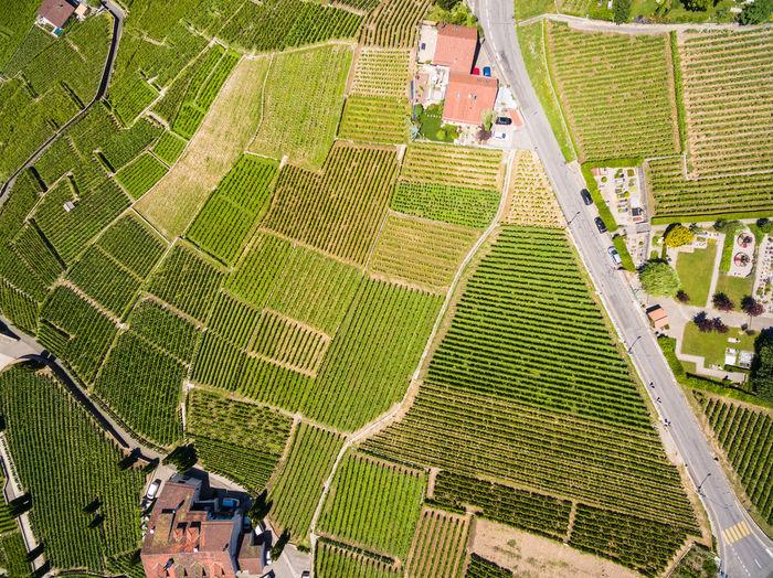 Drone shot of agricultural landscape