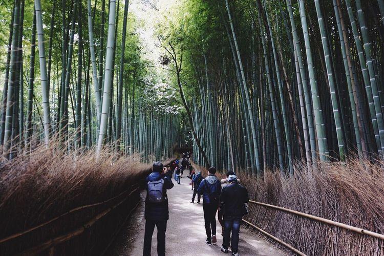 Men walking on pathway amidst trees