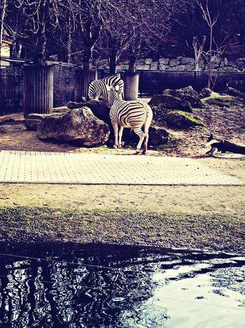 Schönbrunn Zoo