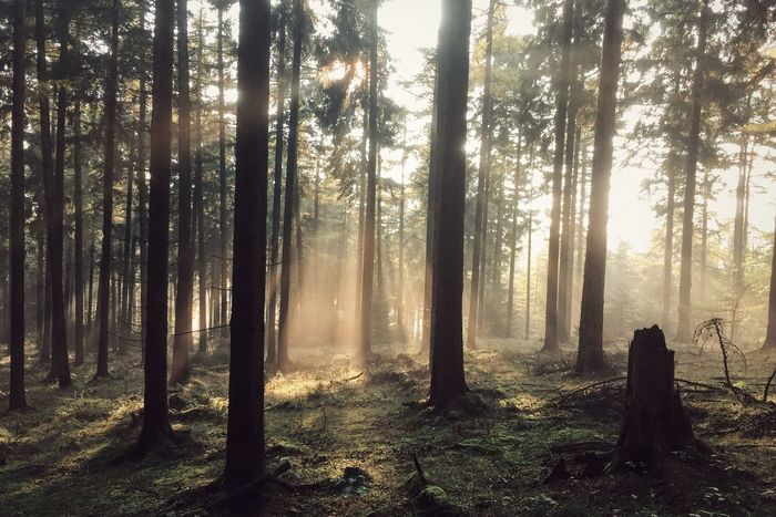 Forest Nature Outdoors Fog Hiking Wanderlust Roaming Tree WoodLand Landscape Tree Trunk Beauty In Nature The Great Outdoors - 2017 EyeEm Awards BYOPaper! The Great Outdoors - 2017 EyeEm Awards Lost In The Landscape