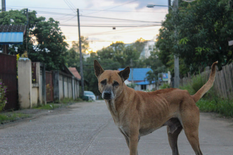 View of a dog standing on road in city