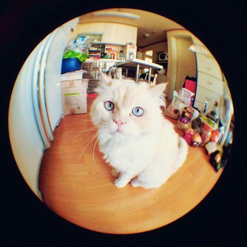 Fine Heema Cute Boy Cat