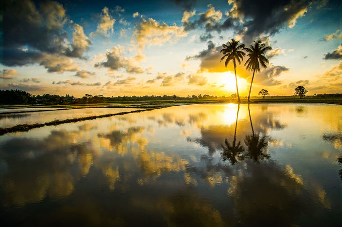 Beauty In Nature Cloud - Sky Day Idyllic Lake Nature No People Outdoors Reflection Scenics Silhouette Sky Sun Sunset Tranquil Scene Tranquility Tree Water Waterfront