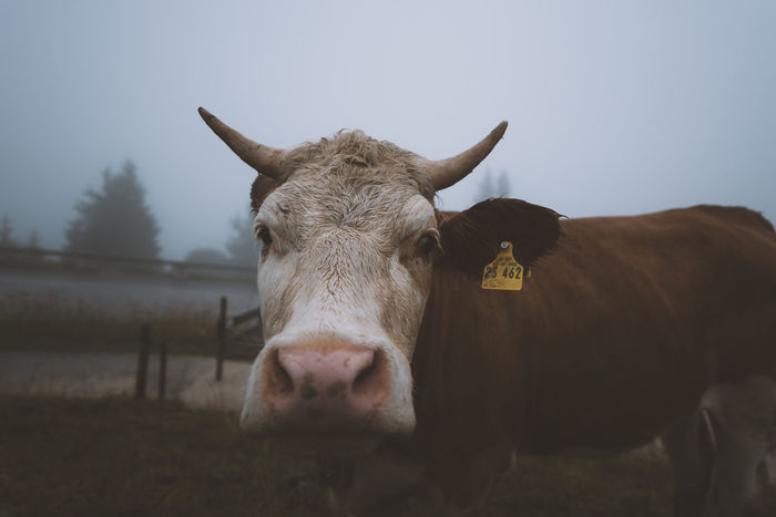 Animals In The Wild Lost In The Landscape Nature Animal Animal Wildlife Cow