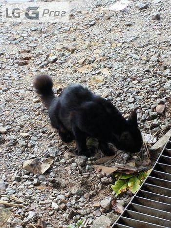 When darkness meets light Alor Setar Gpro2 Landscape Cat Lovers