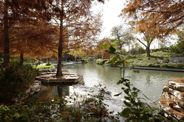 Scenic view of lake in park during autumn