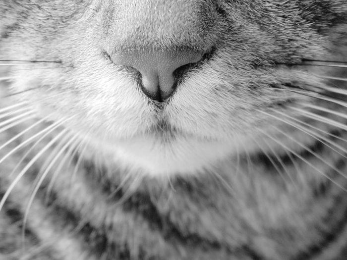 котэ носик кот няша лапа пупсик животное котя