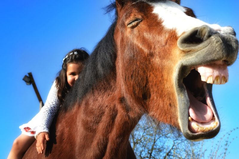 My little horsewhisperer seems to be really funny 😆 Clear Sky Domestic Animals Animal Themes Close-up Mammal Outdoors Day Horse Horse Riding Horsewhisperer Pferd Pferdeflüsterer Cheval
