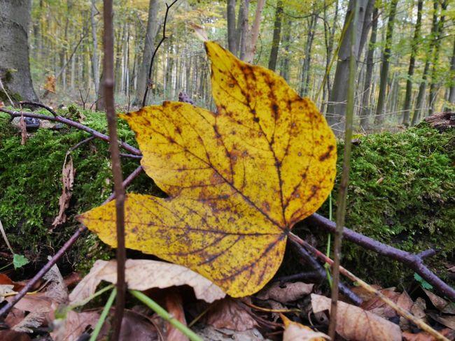 Laub Herbststimmung Herbstblatt Blatt Beauty In Nature Tree Trunk Fallen Scenics Yellow Tree