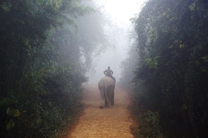 Welcome to the jungle. Safari Animals Wildlife & Nature Wildlife Wilderness Landscape Animal Themes Wild Animal National Park Fog Jungle Elephant Nature Tree One Person Plant Fog Water Full Length Real People Men Lifestyles Growth Rain