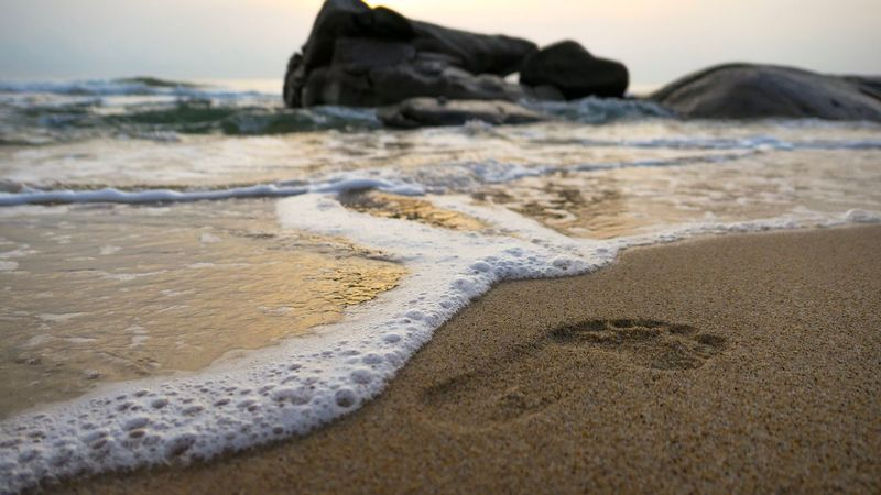 Feetprint Land Beach Sand Sea Water Beauty In Nature Surfing Wave Sport Nature Motion Aquatic Sport Tranquility Scenics - Nature Day Non-urban Scene Tranquil Scene Focus On Foreground Surface Level