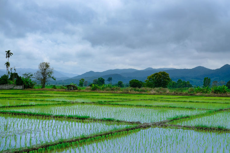 VIEW OF PAADY
