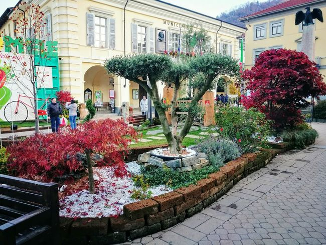 Flower Plant Building Exterior Architecture Built Structure Day Growth Outdoors No People Florist Nature Tree Fiori Piazza Tuttomele Cavour Piemonte The Week On EyeEm Sagra Centro City Fiera Nature Streetphotography Travel Destinations
