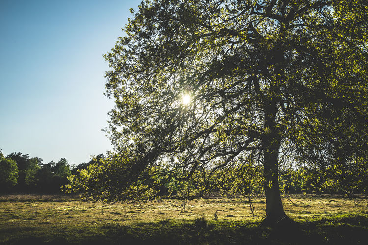 Beauty In Nature Clear Sky Day Environment Field Grass Growth Land Landscape Nature No People Non-urban Scene Outdoors Plant Scenics - Nature Sky Sunlight Tranquil Scene Tranquility Tree