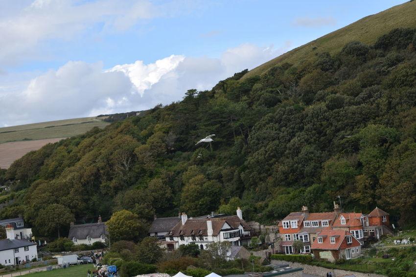 Bird Hills Seagull