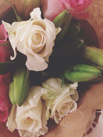 Roses Pink Roses Little White Roses Singer  AWARD