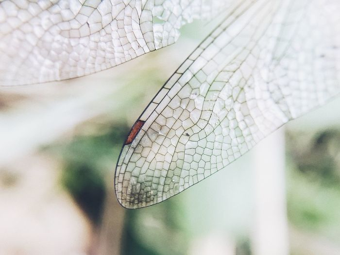 Wings of dragonfly Focus On Foreground Insect Animal Themes Day Close-up One Animal Animals In The Wild Damselfly Nature Animal Wildlife Outdoors No People