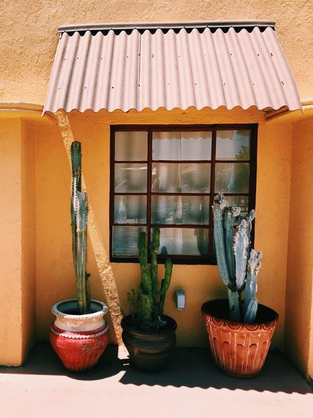 Paint The Town Yellow Potted Plant No People Architecture Outdoors Building Exterior Summer Tranquility Summertime Plant Growth Day Built Structure Nature Close-up Arizona