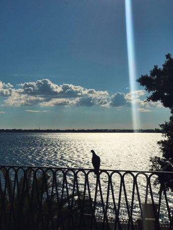 Maniace - Ortigia Water Sea Bird Nature One Animal Railing Beauty In Nature Scenics Animal Themes Silhouette Sky Outdoors Sunset Animals In The Wild Horizon Over Water Day Cloud - Sky Tree Perching No People Sunlight Sunset_collection