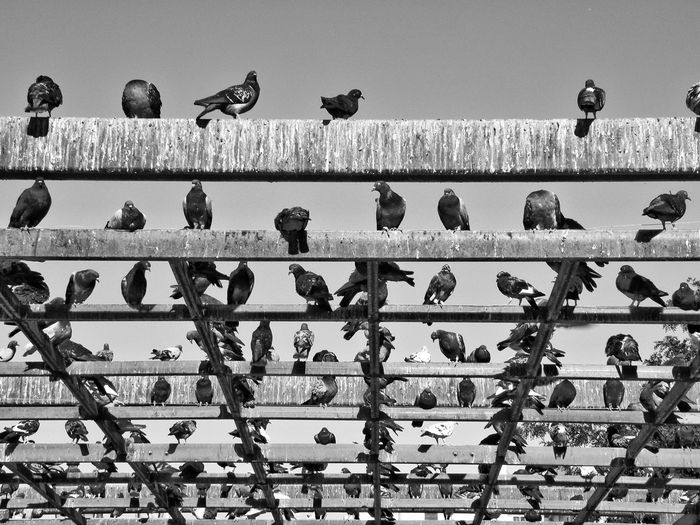 Low Angle View Of Birds Perched On Beams