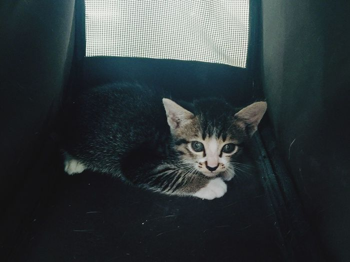 Portrait of kitten resting on pet bed