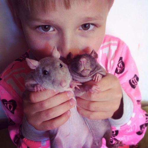 Rat Ratstagram Love Care