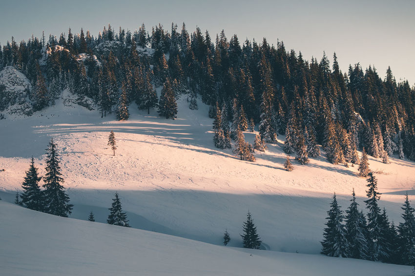 Beauty In Nature Cold Temperature Coniferous Tree Covering Environment Forest Land Landscape Mountain Nature No People Non-urban Scene Outdoors Pine Tree Plant Scenics - Nature Sky Snow Snowcapped Mountain Tranquil Scene Tranquility Tree Winter