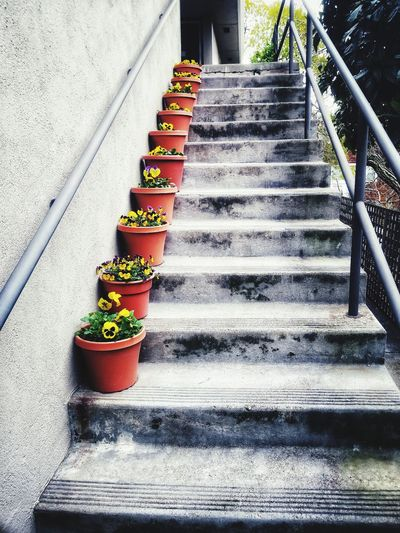EyeEm Best Shots EyeEm Nature Lover Steps And Staircases Steps Multi Colored Staircase In A Row Potted Plant Plant Stairway Railing Stairs Window Box Observation Point Narrow Hand Rail Footbridge