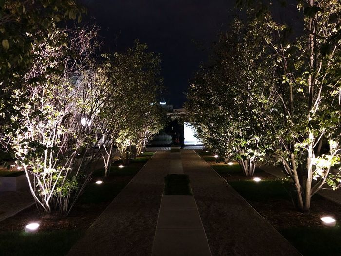 Come to the light Plant Tree Illuminated The Way Forward Direction Night No People Nature Architecture Outdoors Park Formal Garden EyeEmNewHere