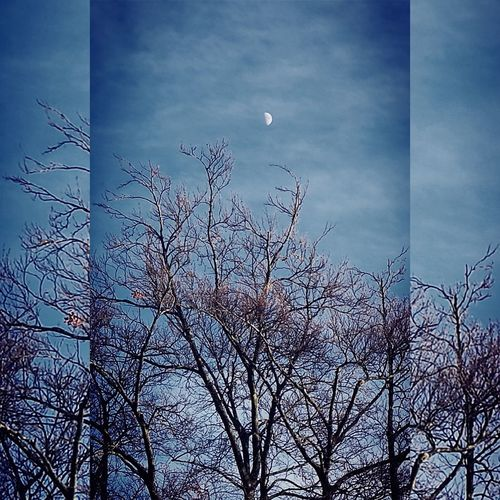 Luna moon & Winter branches🌓 Winter Tree Blue Sky Luna Moon Nature Beauty In Nature Urbanexplorer Bare Branches Beautiful Blue Sky Nature In The City Winter Afternoon Almost Sunset With Moon Out Sky No People Bare Tree Nature Frame In Frame BristolCity Uk England
