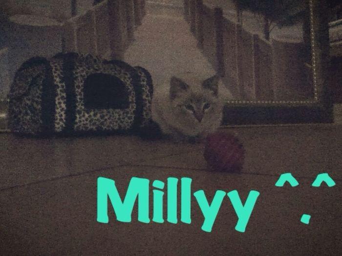 Myy Liiddo Millyy