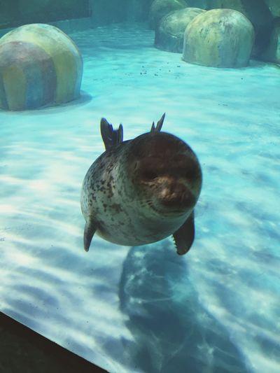 卡哇伊~cute! Tra 旅游 Animals Water