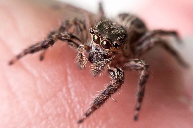 50+ Spiders Pictures HD | Download Authentic Images on EyeEm