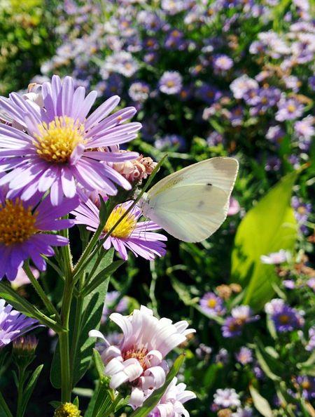 WhiteButterfly Flower Followme Eyeam_bestshot Nature Photography