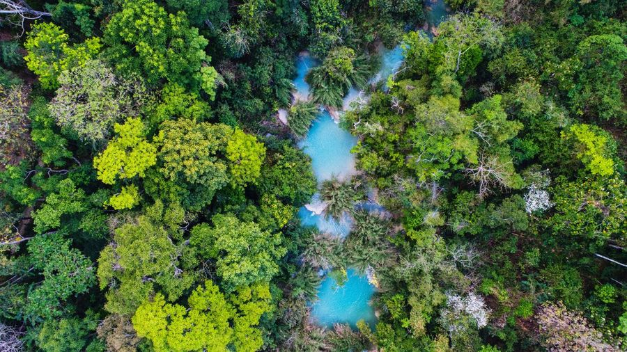 Drone view of trees in forest