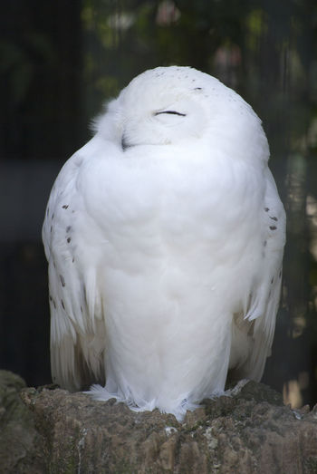 Close-up of white owl perching on rock