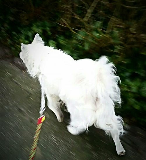 wind, runnin,doggytag,chill,on his way