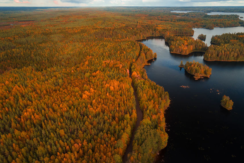 Aerial view from Liesjärvi National Park on an autumn afternoon with sun starting to go down, Finland Autumn Autumn colors Finland Finland♥ Aerial View Beauty In Nature Day Drop Forest Lake Landscape Liesjärvi Nature No People Non-urban Scene Outdoors Scenics - Nature Water Woodlands